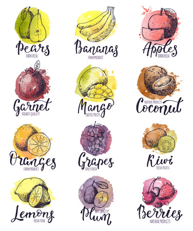 Fruits vector fruity apple banana and exotic mango with fresh slices and watercolor logo of tropical fruit with lettering sign illustration fruitful set isolated on white background