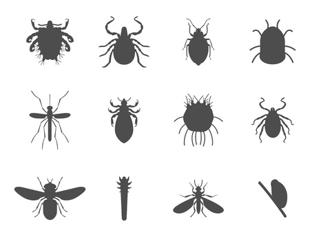 Human skin parasites vector silhouette housing pests insects disease parasitic bug macro animal bite dangerous infection medicine pest illustration.