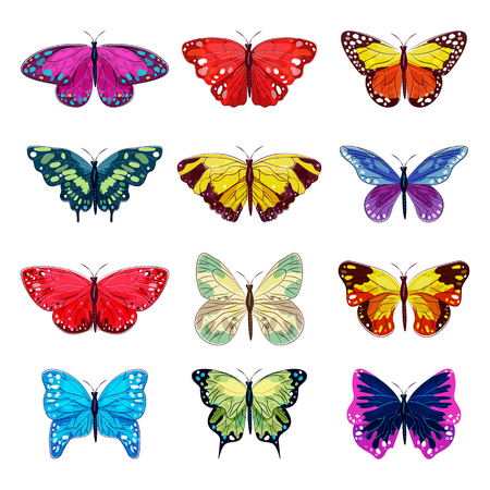 Butterfly vector colorful insect flying for decoration and beautiful butterflies wings fly in spring illustration flowering decor set isolated on white background