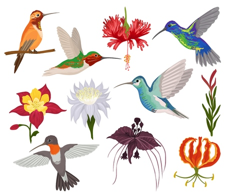 Hummingbird vector tropical humming bird character with beautiful birdie wings on exotic flowers in flowering nature illustration set of flying humming-bird in tropic isolated on white background