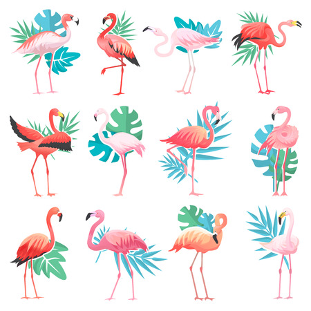 Flamingo vector tropical pink flamingos and exotic bird with palm leaves illustration set of fashion birdie isolated on white background.