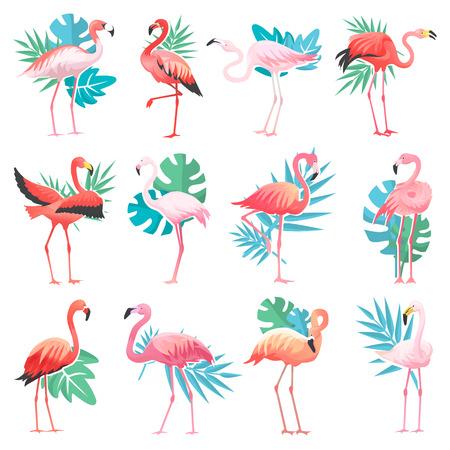 Flamingo wektor tropikalne różowe flamingi i egzotyczny ptak z liści palmowych ilustracja zestaw ptaszyna moda na białym tle. Ilustracje wektorowe