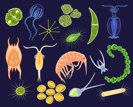 Plankton vector aquatic phytoplankton and planktonic microorganism under microscope in ocean illustration set of micro cell organism in microbiology underwater sea isolated on background.