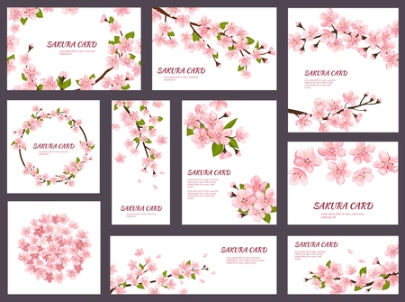 Sakura vector blossom cherry greeting cards with spring pink blooming flowers illustration japanese set of wedding invitation flowering template decoration isolated on white background. Illustration