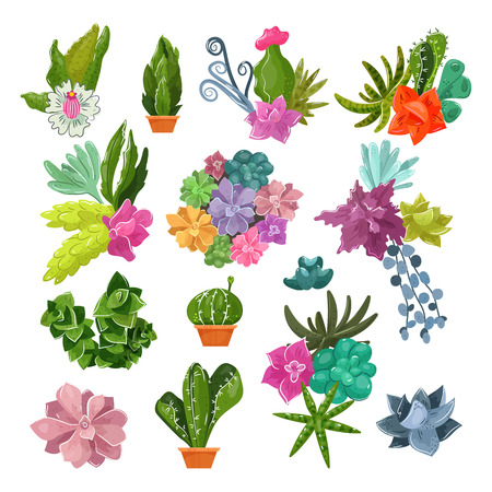 Cactus vector cartoon botanical potted cacti with tropical flowers and flowering cactaceous succulent plant botany illustration set of flowerpot for home interior decor isolated on white background.