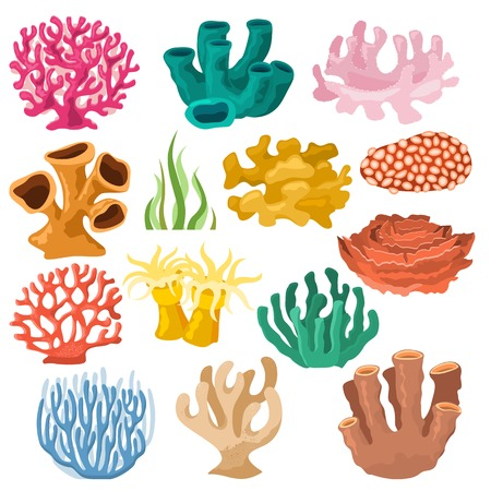 Coral vector sea coralline or exotic cooralreef undersea illustration coralloidal set of natural marine fauna in ocean reef and aquatic plant for aquarium isolated on white background