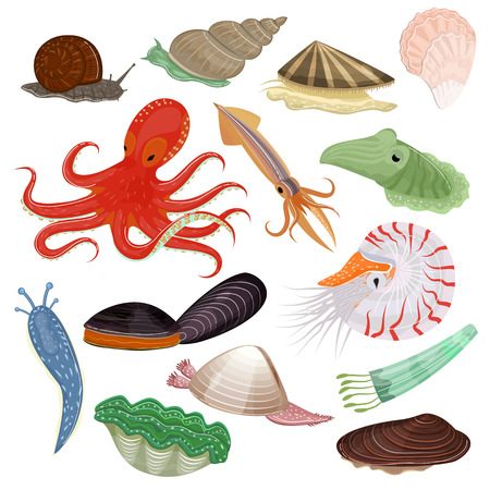 Coquillages vecteur animal marin poulpe mollusques tentacule et caractère animal escargot huître poulpe en mer illustration ensemble de fruits de mer seiche et diable isolé sur fond blanc Vecteurs