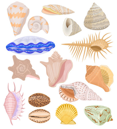 Shells vector marine seashell and ocean cockle-shell underwater illustration set of shellfish and clam-shell or conch-shell isolated on white background Vettoriali