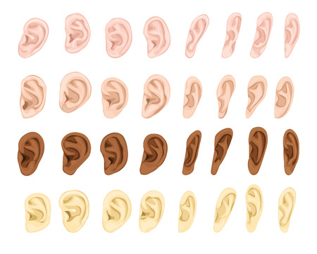 Ear vector human eardrum ear rope hearing sounds listening body part and deafness silence illustration sensory set female male ears isolated on white background