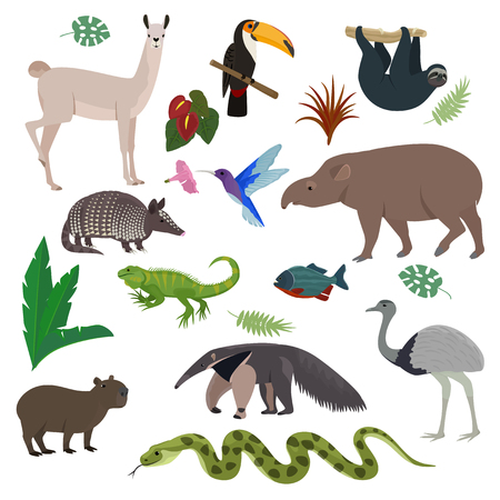 Animal in South America vector wild animalistic mammal character capybara tapir toucan in southern wildlife illustration set of tropical lizard colibri isolated on white background. Vettoriali