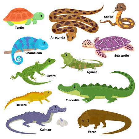 Reptil vector animal reptil personaje lagarto tortuga iguana y camaleón conjunto de ilustración de mascota de cocodrilo varan dragón aislado sobre fondo blanco.