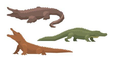Crocodile vector cartoon crocodilian character of green alligator carnivore illustration animalistic set of dangerous amphibian predator with jaws isolated on white background
