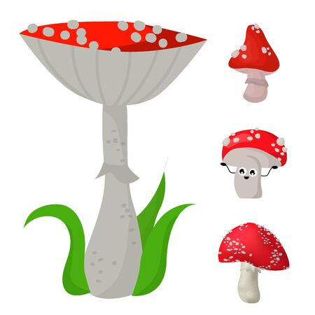 amanita mushrooms dangerous set poisonous season toxic fungus food illustration. Imagens