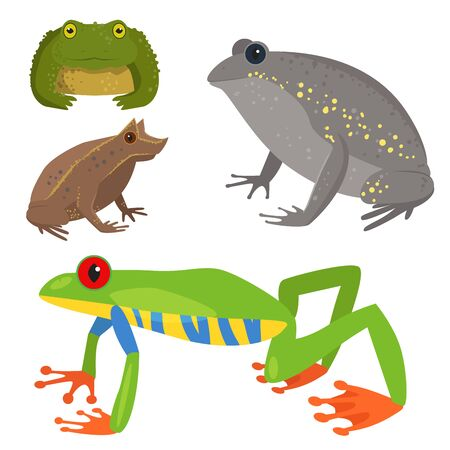 Frog cartoon tropical wildlife animal green froggy nature funny illustration toxic toad amphibian.