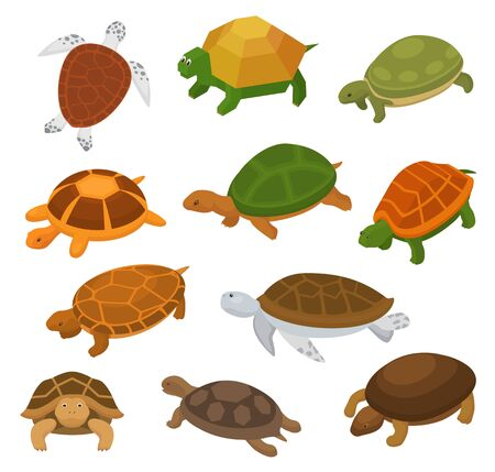 Turtle vector cartoon seaturtle character swimming in sea and tortoise in tortoise-shell illustration set of reptile animal hiding in turtle-shell isolated on white background