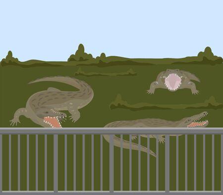 Reptile animals dangerous crocodiles wild predator alligators vector illustration. Dangerous hangry toothy carnivore crocodiles behind fence in nature swamp grass, zoo or farm.