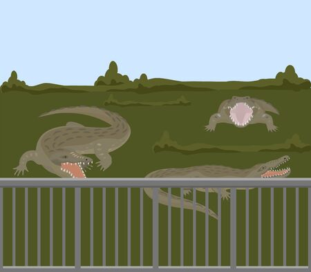 Reptile animals dangerous crocodiles wild predator alligators vector illustration. Dangerous hangry toothy carnivore crocodiles behind fence in nature swamp grass, zoo or farm.