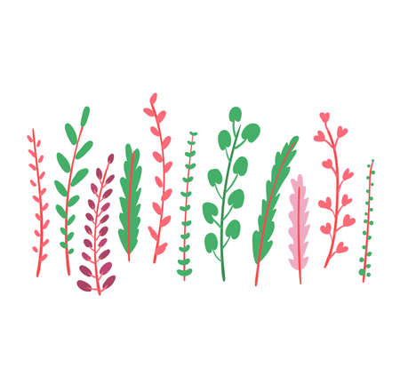 Grass spring blossom grow up isolated on white, flat vector illustration. Green leaf on peduncle stem, fall different weed. Herb plants verdant color, organic outdoor healing greenery.