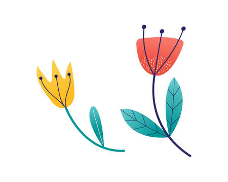 Yellow and red flower, spring blossom grow up isolated on white, cartoon vector illustration. Two fall floret, pick gift plants. Female different flower, green leaf on peduncle stem.