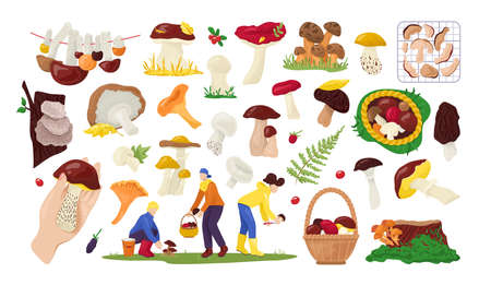 Set of edible mushrooms collection in nature, for food isolated on white vector illustration. Autumn mushroom collectors in forest, boletus, chanterelle, champignon and truffle. Busket with mushroom.