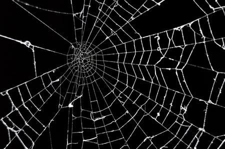 黒の背景にクモの巣
