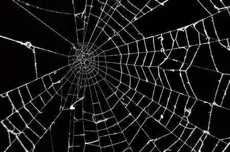 spider web: Spider web on black background