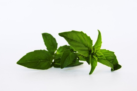 Fresh basil on white background photo