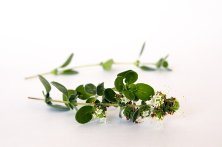 fresh marjoram closeup photo