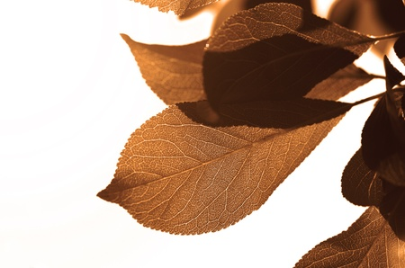 Closeup of autumn leaves on white background Stock Photo - 10762877