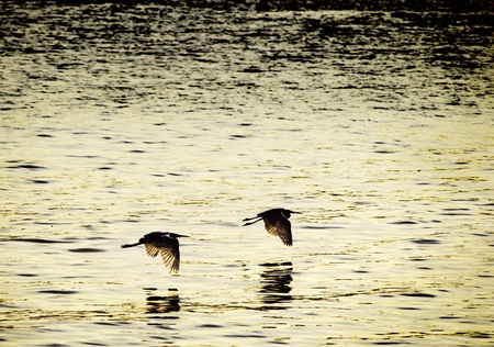 sync: Two birds flying in sync at sunset - love or friendship concept Stock Photo