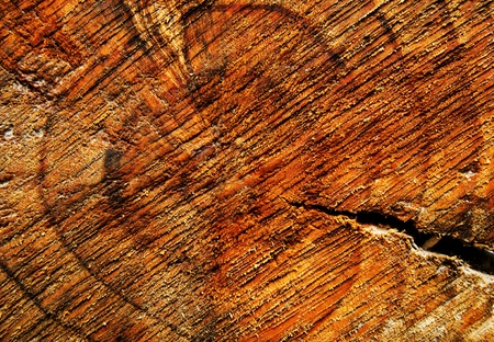 Background with texture of a tree stump photo