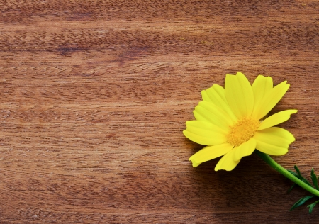 Yellow daisy flower over wood photo
