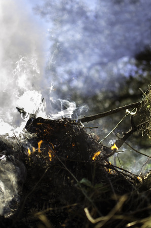Detail of fire flames and smoke in th forest photo