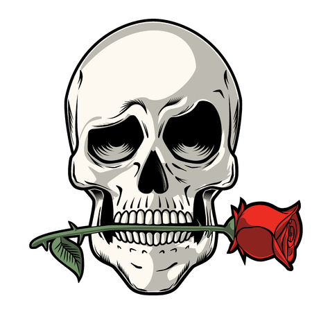 Hand Drawn Skull with a Rose - Skull with a funny look holding a rose between its teeth Illustration