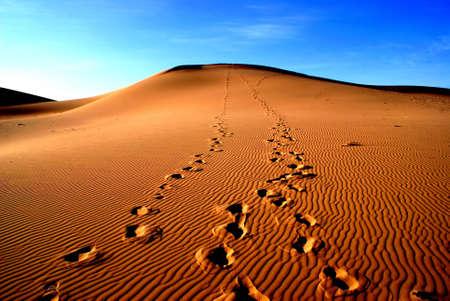 Gobi desert, Mongolia photo