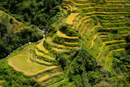 Rice, Phillipines photo