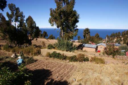 planted: Amantani island, Titicaca lake, Peru