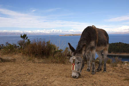 Isla del sol, Titicaca lake, Bolivia Stock Photo - 10961520
