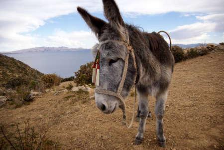 Isla del sol, Titicaca lake, Bolivia photo