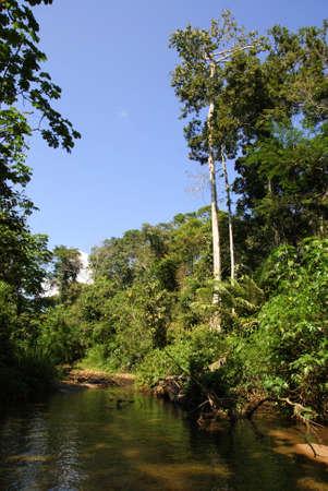 Tropical forest, Bolivia
