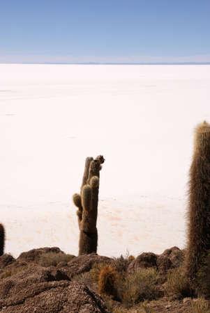 pescados: Isla del Pescado, Salar de Uyuni, Bolivia