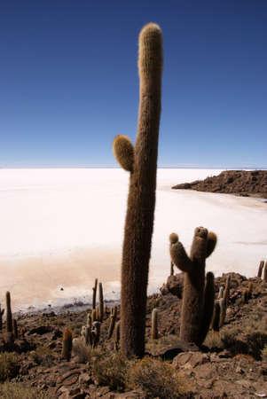 Isla del Pescado, Salar de Uyuni, Bolivia photo