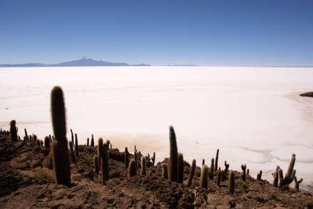 Isla del Pescado, Salar de Uyuni, Bolivia Stock Photo - 11235268