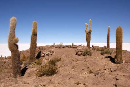 Isla del Pescado, Salar de Uyuni, Bolivia Stock Photo - 11266436