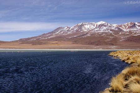 laguna: Laguna celeste, Flamingos, Bolivia