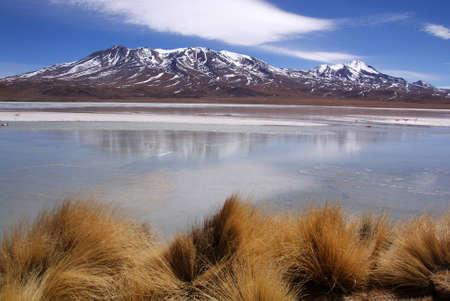 Laguna celeste, Flamingos, Bolivia photo