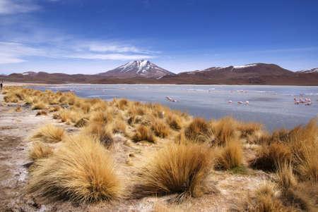 Laguna celeste, Flamingos, Bolivia
