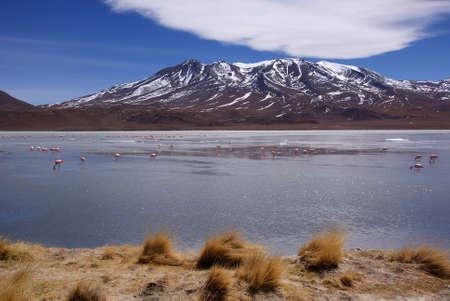 Laguna celeste, flamants roses, de la Bolivie Banque d'images