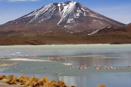 Flamingos on lake, Bolivia Stock Photo - 11421611