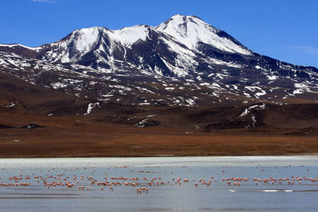 Flamingos on lake, Bolivia Stock Photo - 11421612